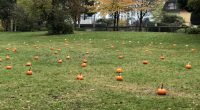 Our Kindergarten and a few lucky grade ones had a great day enjoying the pumpkin patch and a hot chocolate up in the orchard! Thank you to the Kindergarten teachers […]